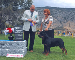 male rottweiler CH Elswick's Rock of Kourage wins best of winners at dog show