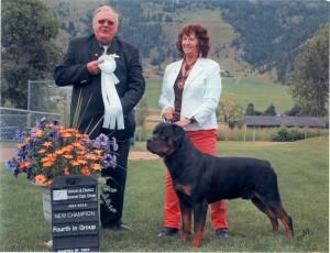 Champion male Rottweiler Danny Dixon