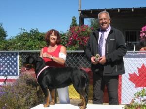 female rottweiler Taylor wins V1 rating at Seiger show