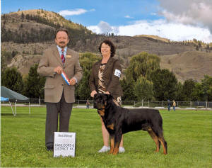 male rottweiler ch elswick's danny dixon wins best of breed