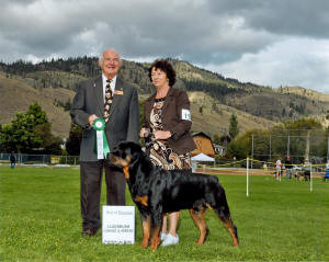 male rottweiler champion wins best of opposite at ckc show