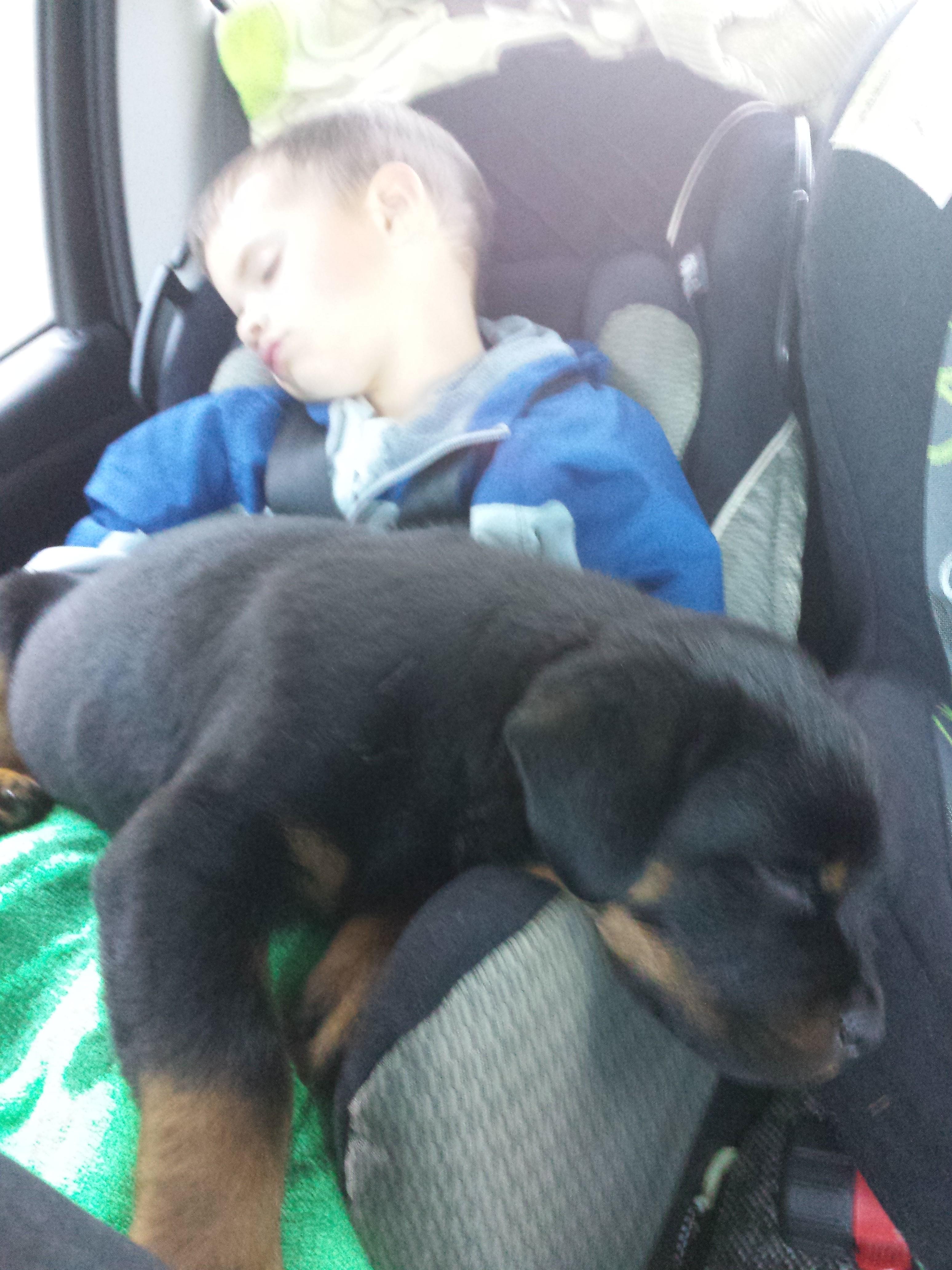 male puppy sleeping